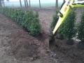 Landscaping - 021.jpg