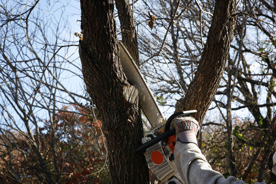Hedge-Cutting-and-Tree-Care-Slide-2
