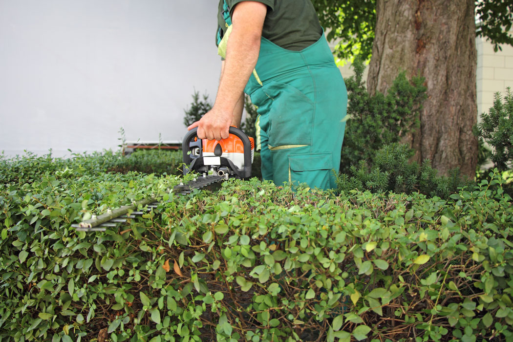 Hedge-Cutting-and-Tree-Care-Slide-4